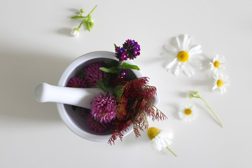 medicinal flower  cure  ointment
