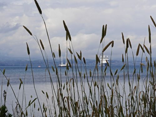 mediterranean booked grasses