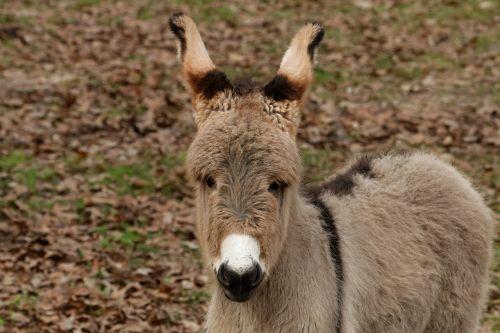 mediterranean donkey donkey baby