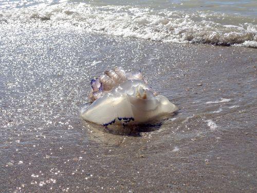 medusa beach sea
