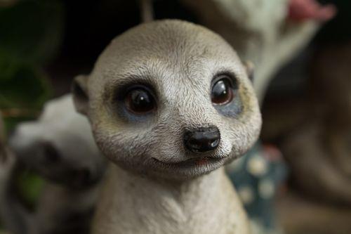 meerkat cute rodent