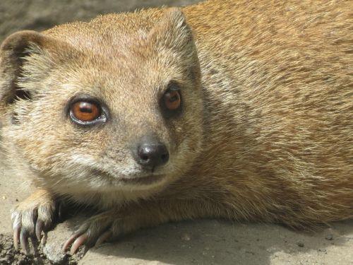 meerkat děčín zoo cute