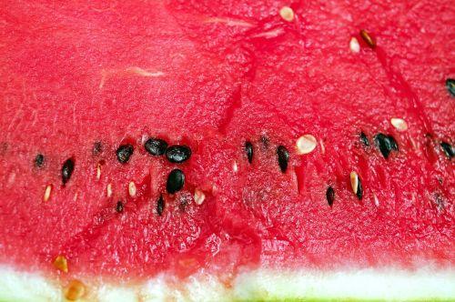 melon watermelon fruit