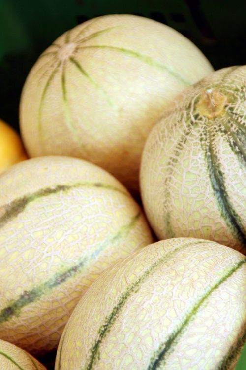 melon melons green