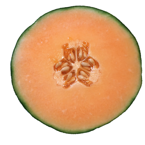melon cantaloupe orange