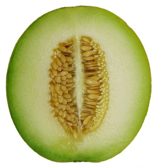 melon cross section honeydew cantaloupe