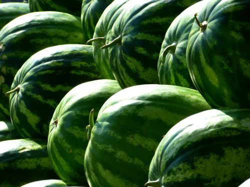 melons water melons fruit