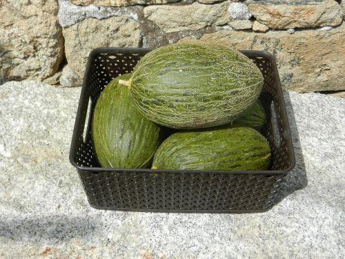 melons fruit food