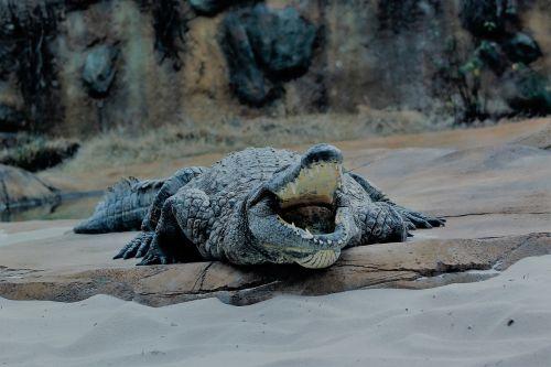 memphis zoo alligator