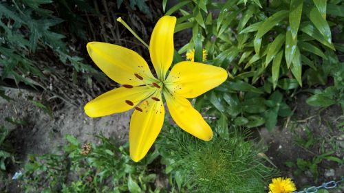 merchant louis moss flower