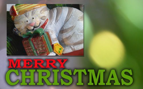 Merry Christmas Greeting With Kitty