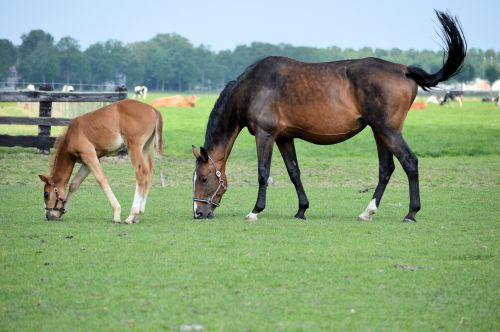 Merry And Foal