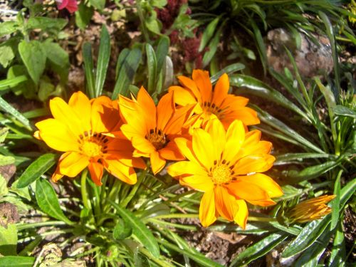 My Old Gardens (11)