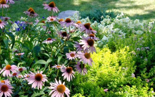 My Old Gardens (15)