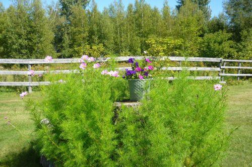 My Old Gardens (3)