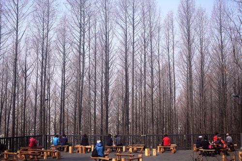 meta es quay air forest sul road