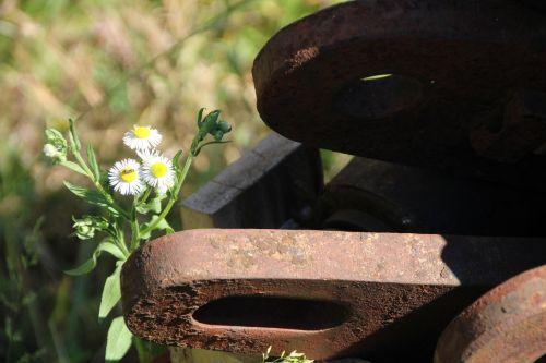 metal flower rusted
