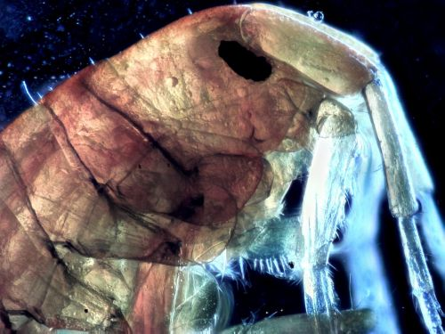microscopy photo-microscopy closeup
