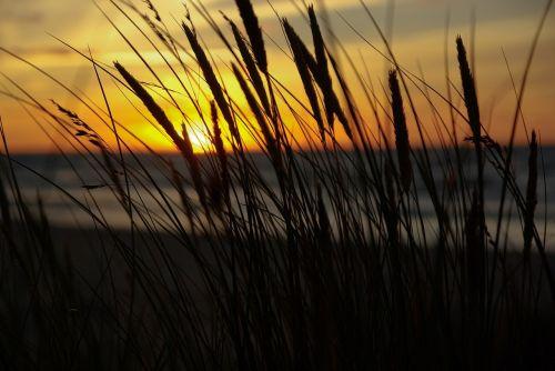 midnight sun sunset reeds