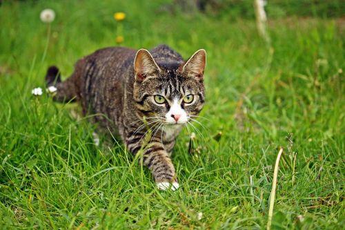 mieze cat kitten