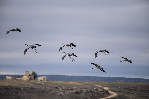 migration  cranes  spain