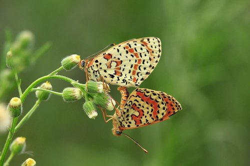 migratory  freedom  nature