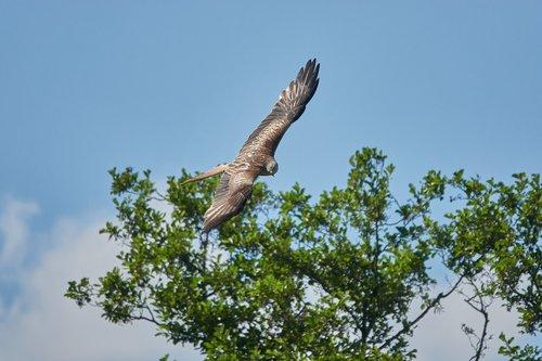 milan  flight  tree