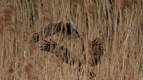milan  nest  landing