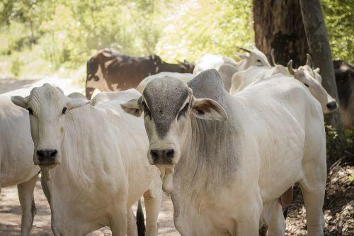 milk farm rural area
