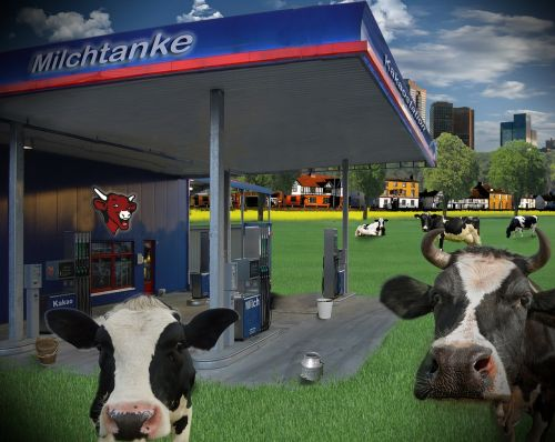 milk petrol stations cows