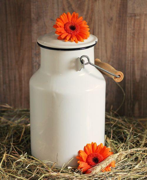 milk can gerbera flowers