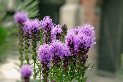 milk thistle is rich  plant  summer