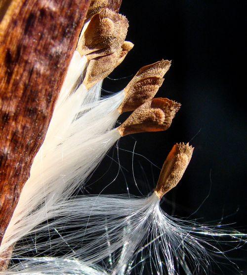 milkweed spring departure