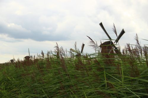 mill kinderdijk grass