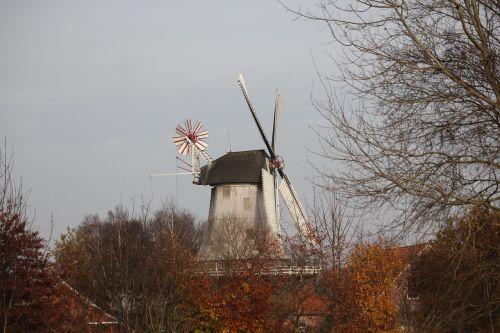 malūnas,vėjo malūnas,ruduo,sparnas,pastatas,miltų malūnas,pieva,medžiai,spalvinga