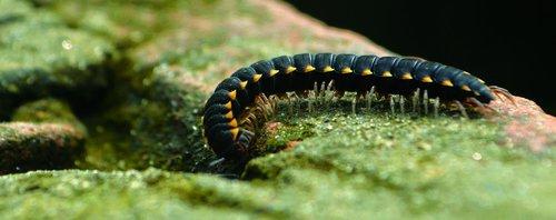 millipedes  life  nature