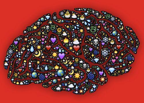 mind brain cerebrum