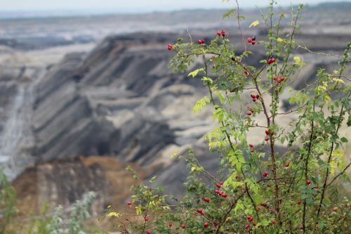 mining open pit mining brown coal