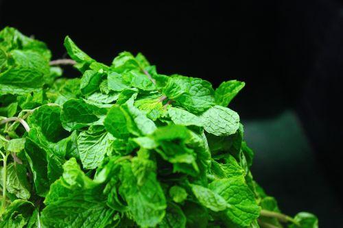 mint leaves mint fresh
