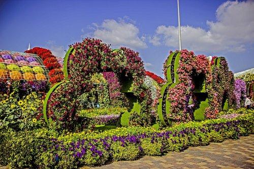 miracle garden dubai  flowers  nature