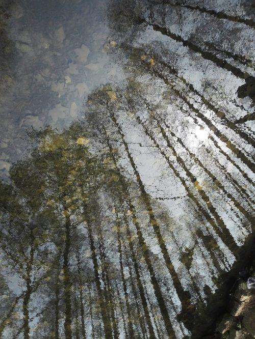 mirror flower water