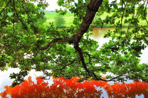 mirroring water red