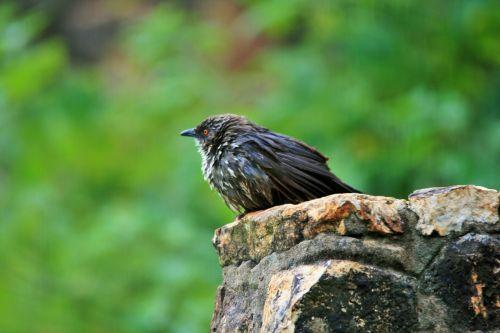 Miserable Little Bird