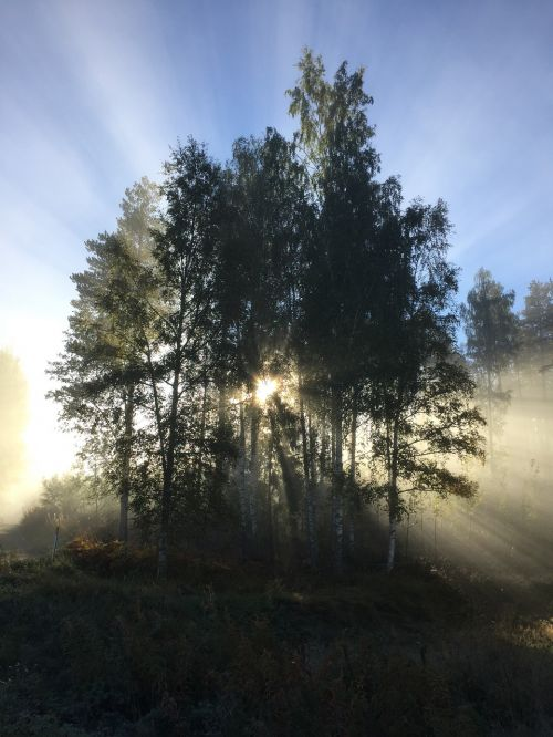 mist backlight rays of sunshine