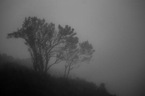 mist landscape fog