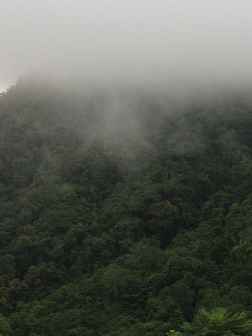 mist fog rainforest