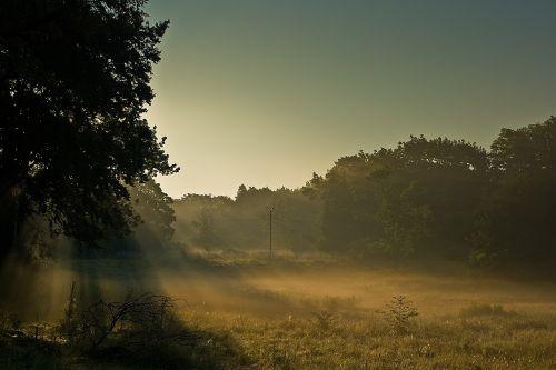 mist rays of light sunlight