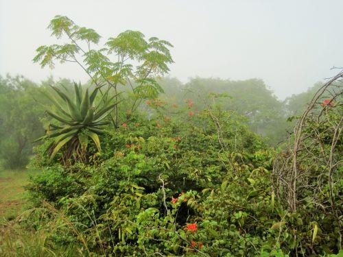 Mist All Around