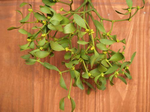 mistletoe sprig holidays