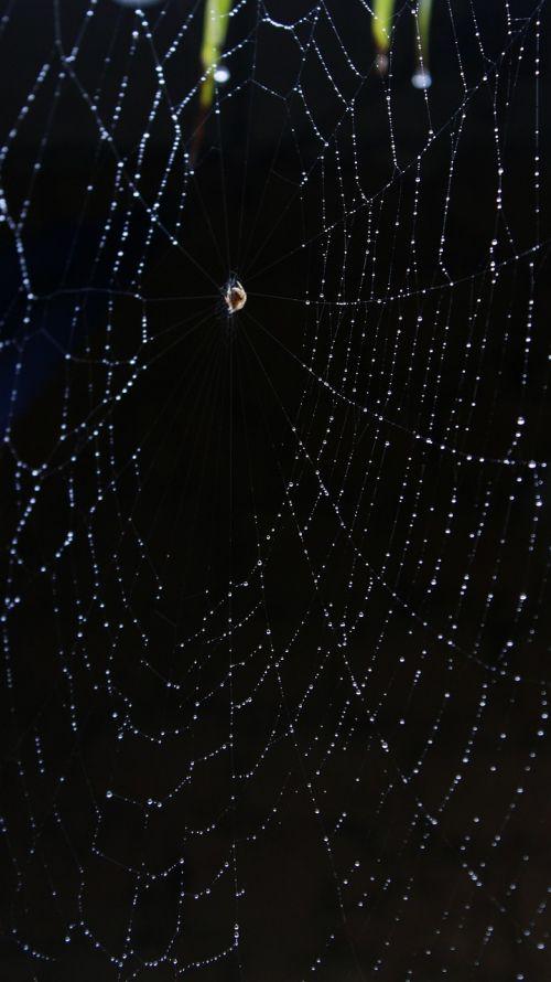 misty web misty web